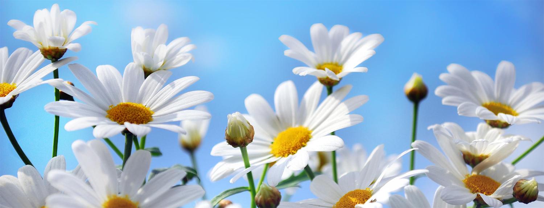 daisy-madelief-home